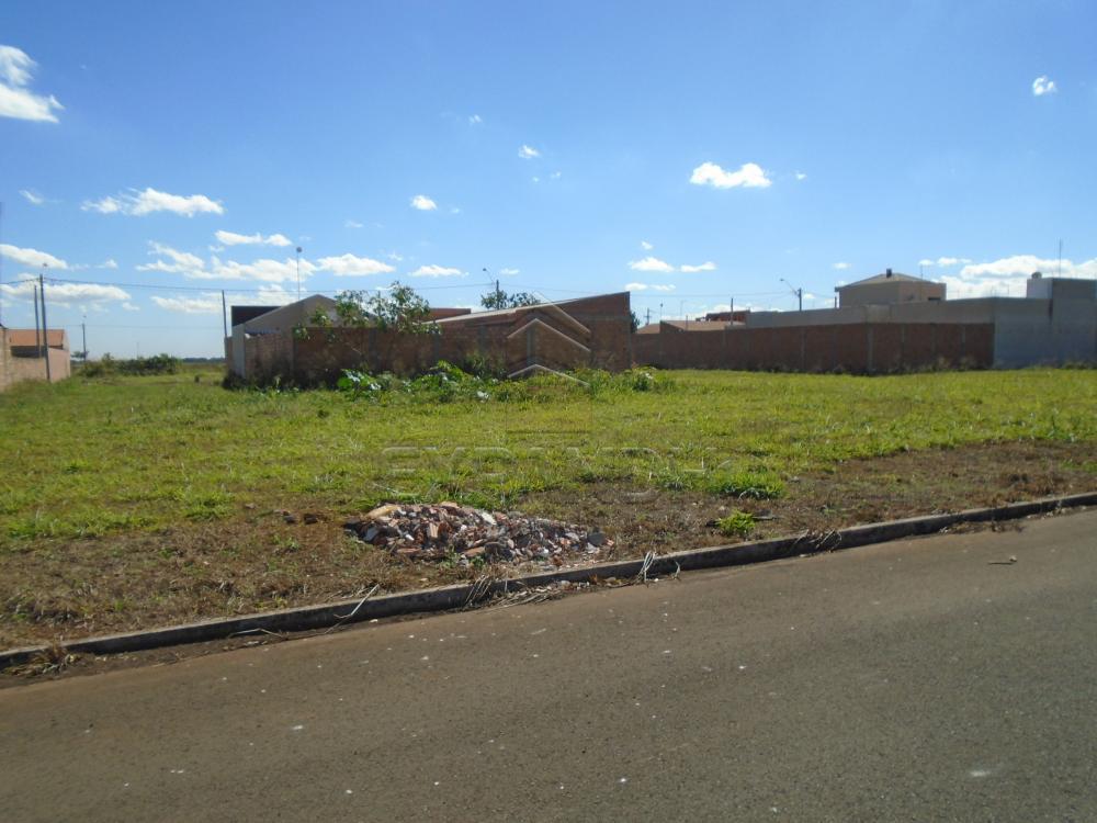 Comprar Terrenos / Padrão em Sertãozinho apenas R$ 87.000,00 - Foto 4