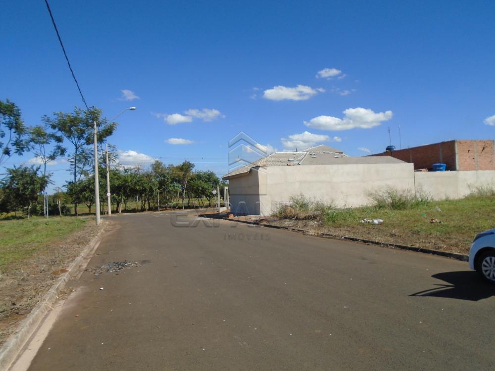 Comprar Terrenos / Padrão em Sertãozinho apenas R$ 87.000,00 - Foto 6