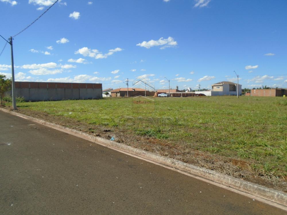Comprar Terrenos / Padrão em Sertãozinho apenas R$ 87.000,00 - Foto 2