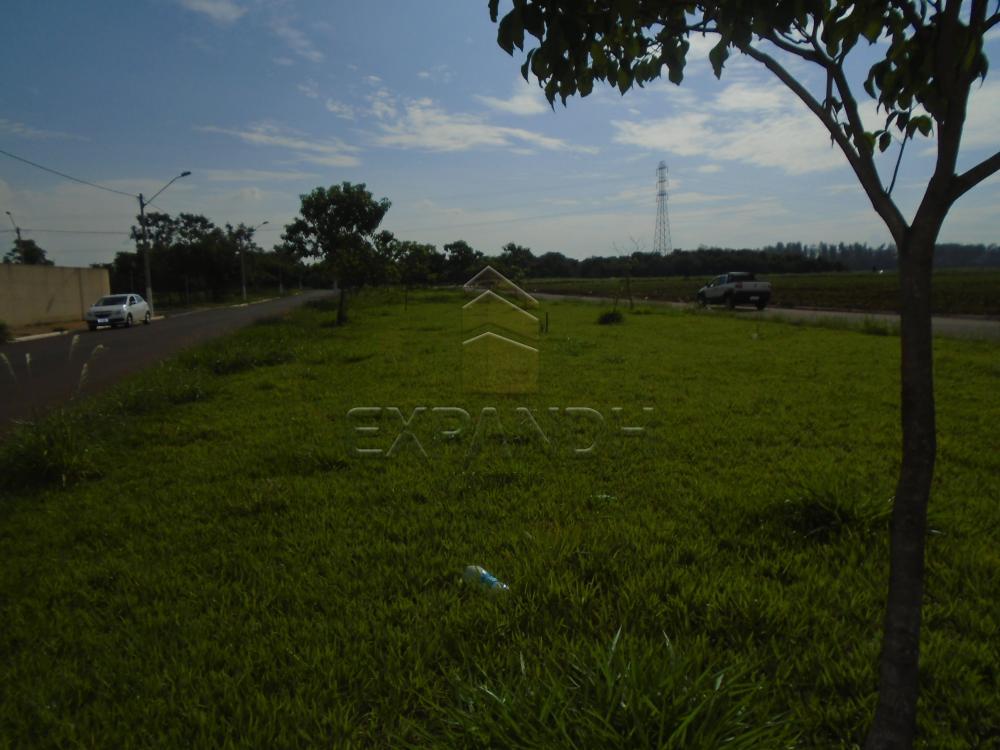 Comprar Terrenos / Padrão em Sertãozinho apenas R$ 116.000,00 - Foto 4