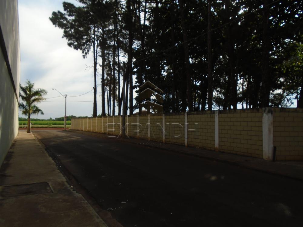 Comprar Rurais / Chácara em Sertãozinho R$ 1.000.000,00 - Foto 2