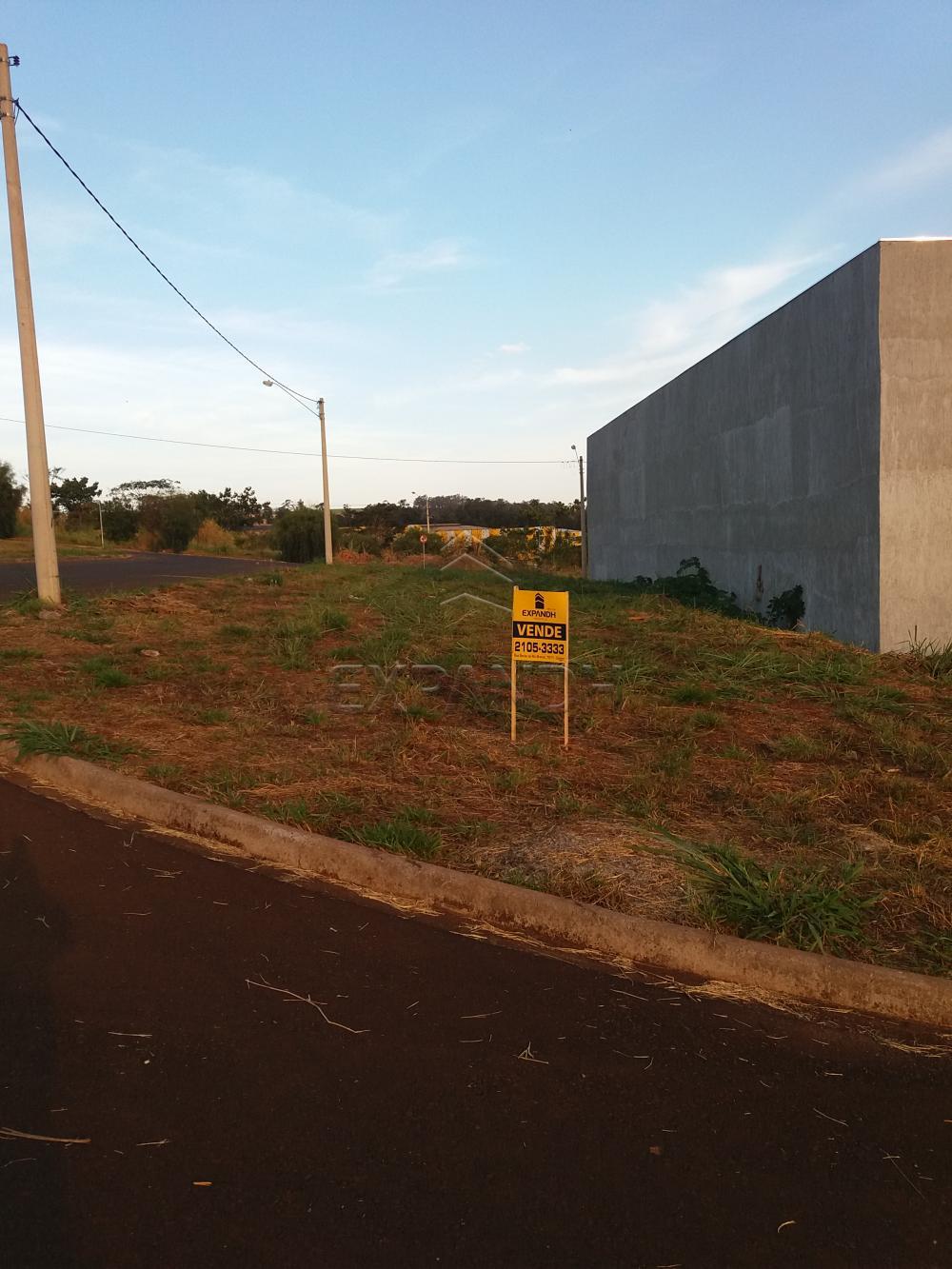 Comprar Terrenos / Padrão em Sertãozinho R$ 100.000,00 - Foto 1