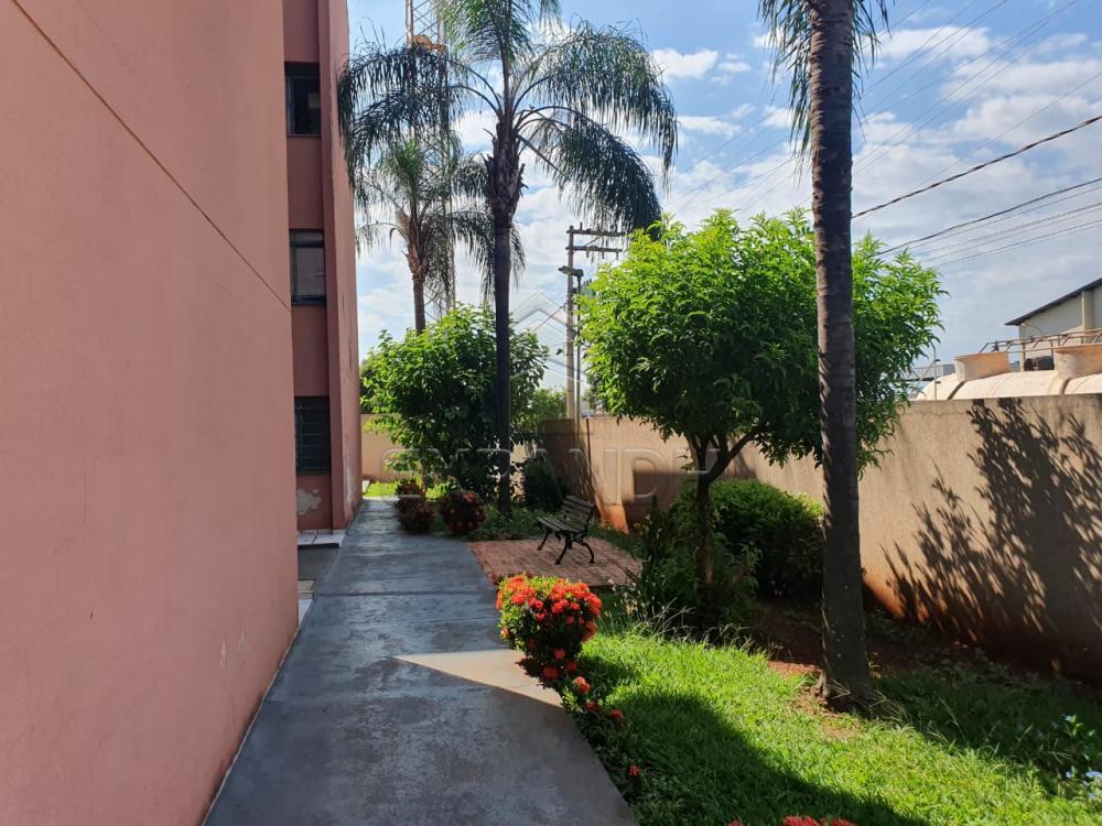 Alugar Apartamentos / Padrão em Sertãozinho apenas R$ 550,00 - Foto 3