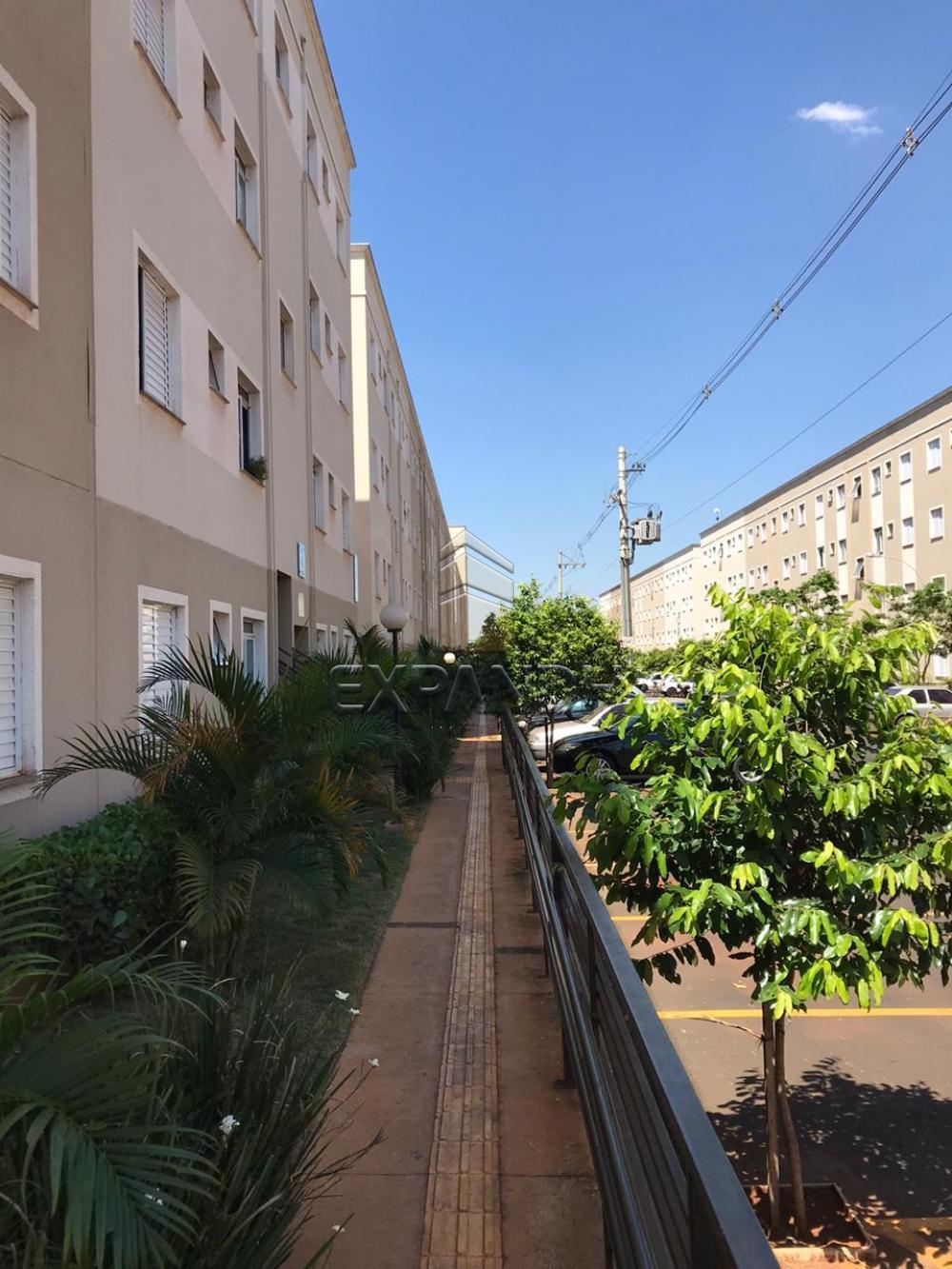 Alugar Apartamentos / Padrão em Sertãozinho apenas R$ 850,00 - Foto 2