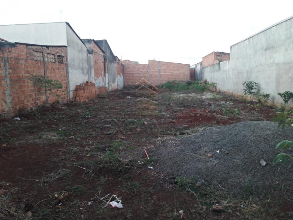 Comprar Terrenos / Padrão em Sertãozinho apenas R$ 140.000,00 - Foto 3