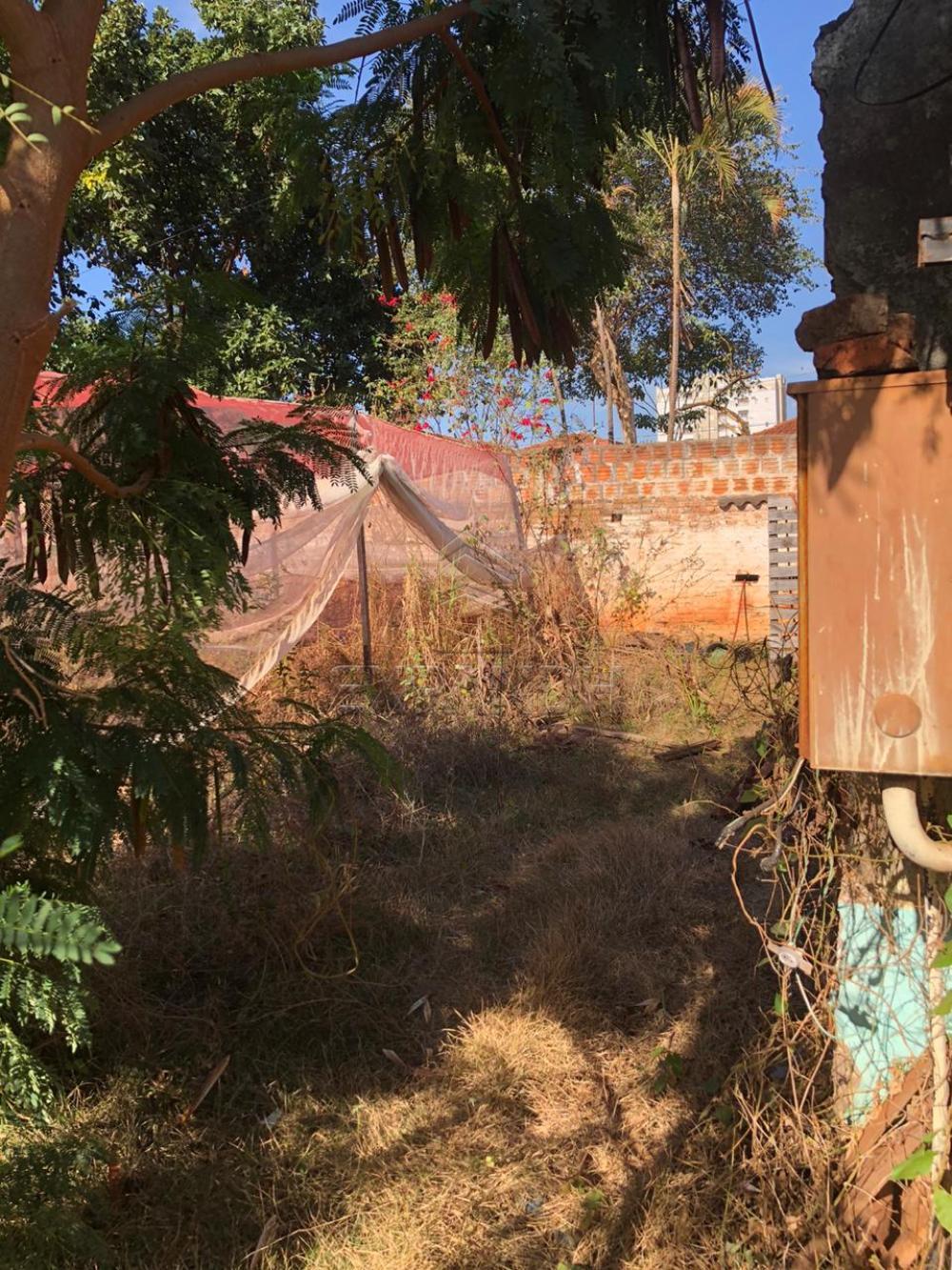 Alugar Terrenos / Área em Sertãozinho R$ 1.200,00 - Foto 5