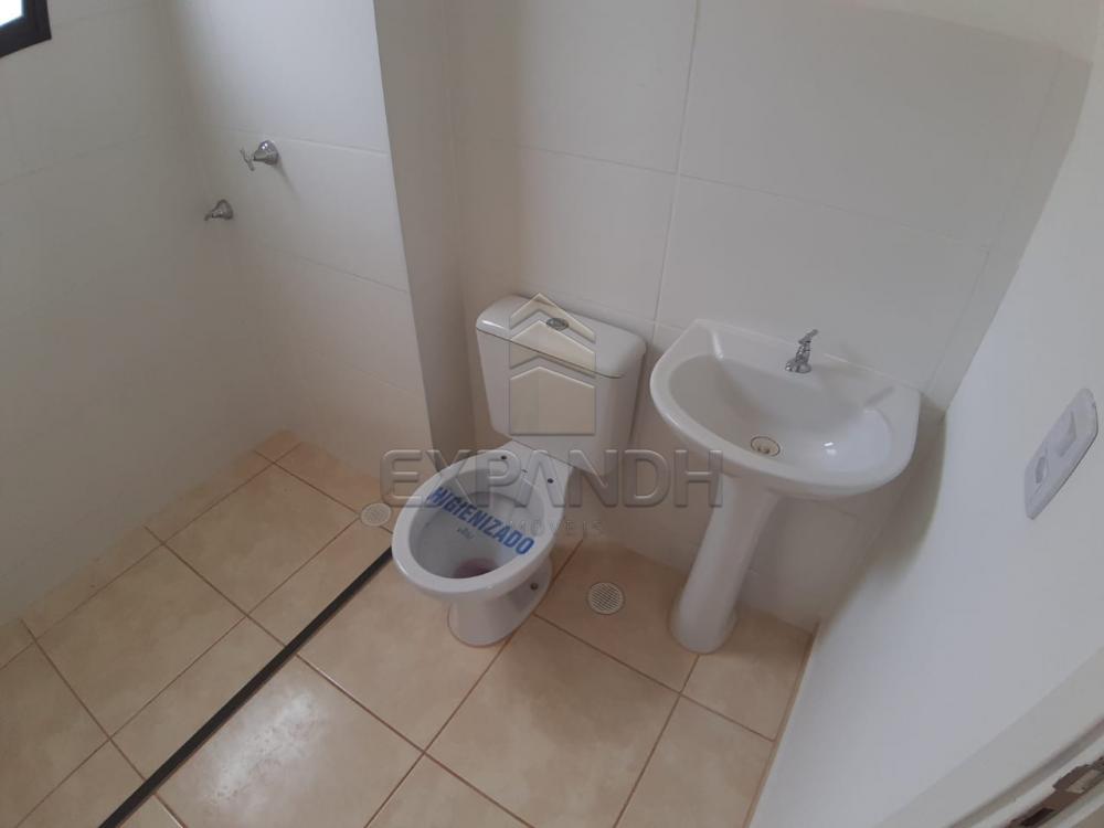Alugar Apartamentos / Padrão em Sertãozinho apenas R$ 450,00 - Foto 29