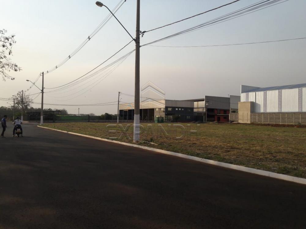 Comprar Terrenos / Área em Sertãozinho apenas R$ 290.000,00 - Foto 3