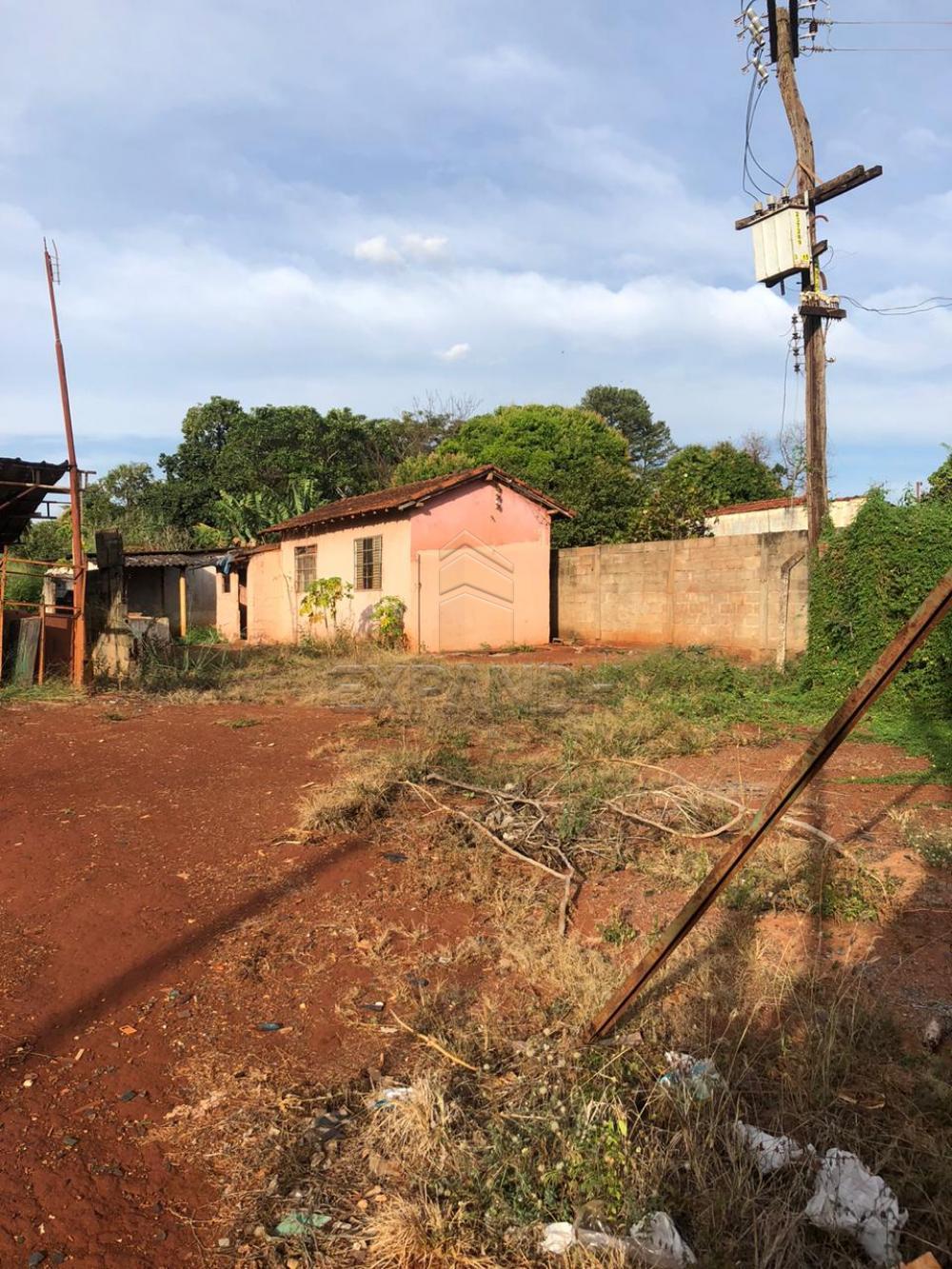 Alugar Rurais / Chácara em Sertãozinho apenas R$ 1.300,00 - Foto 6