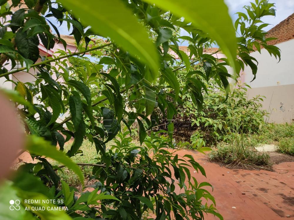 Comprar Terrenos / Padrão em Sertãozinho R$ 350.000,00 - Foto 3