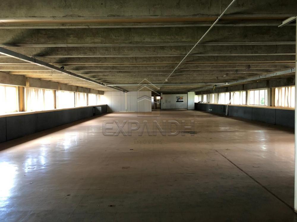 Alugar Comerciais / Sala em Sertãozinho R$ 4.000,00 - Foto 3
