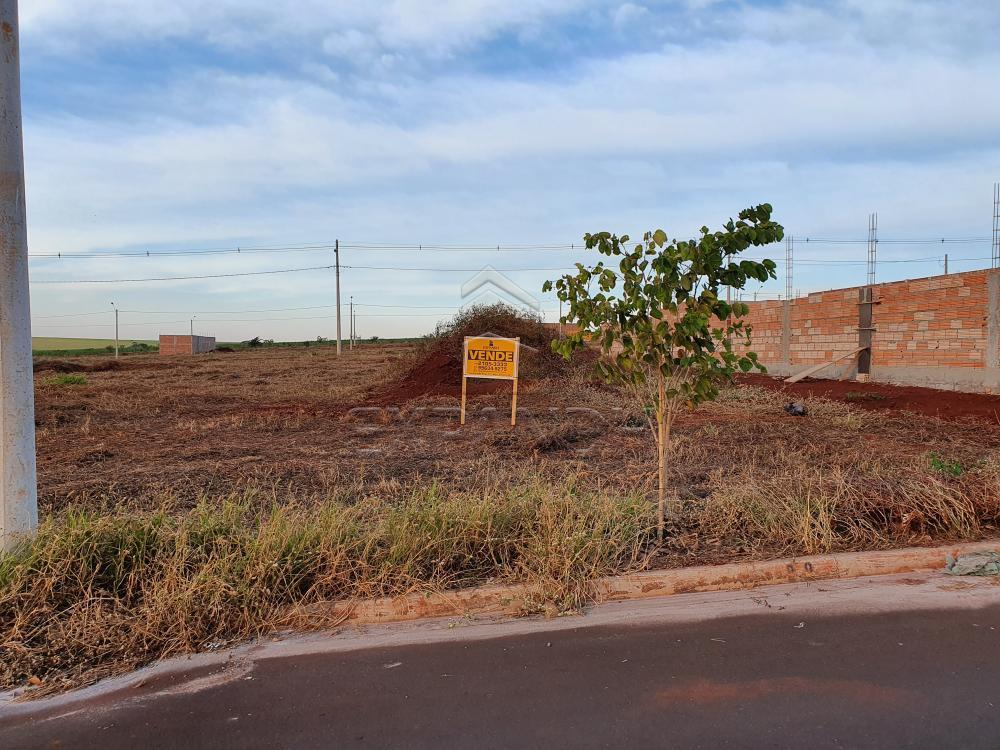 Comprar Terrenos / Padrão em Sertãozinho R$ 88.490,00 - Foto 3