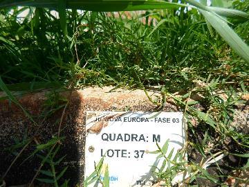 Comprar Terrenos / Padrão em Sertãozinho R$ 135.000,00 - Foto 2