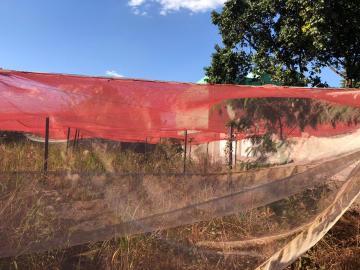 Alugar Terrenos / Área em Sertãozinho R$ 1.200,00 - Foto 4