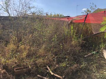 Alugar Terrenos / Área em Sertãozinho R$ 1.200,00 - Foto 6